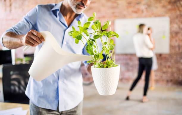 Employé en train d'arroser une plante verte au travail